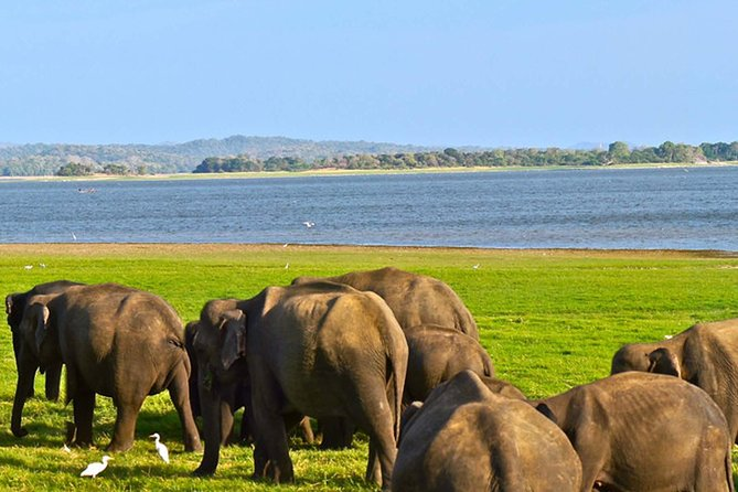 Private Tour: Kaudulla National Park Safari photo 6