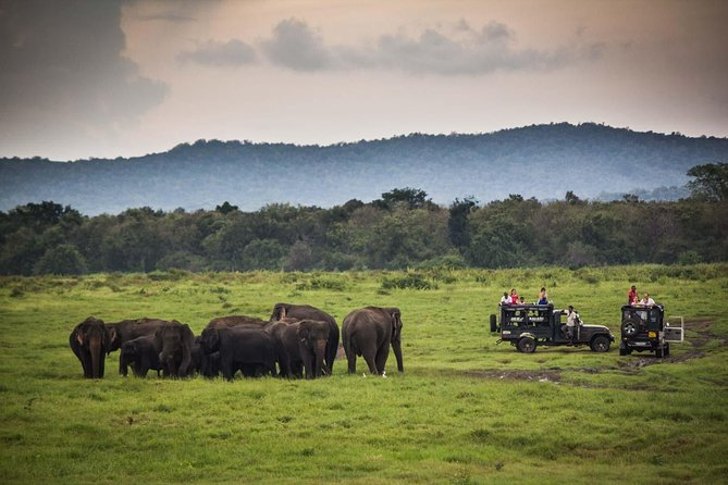 Private Tour: Kaudulla National Park Safari photo 3