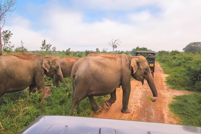 Private Tour: Kaudulla National Park Safari photo 5