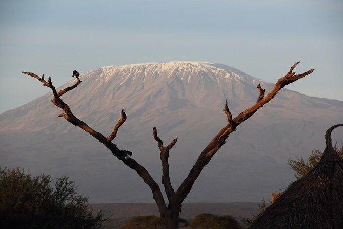 3-Day Jumbo Trail Safari
