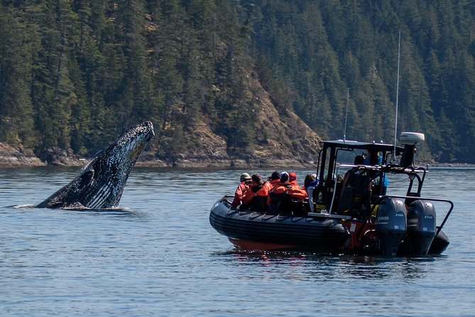 4-Hour Afternoon Whale Watching Tour