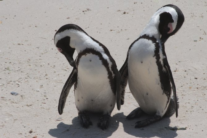 PREMIUM Cape Point and Penguin Viewing Tour photo 1