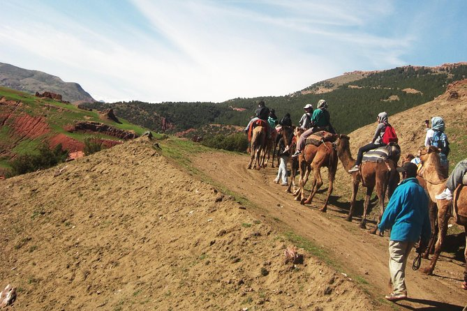 Camel Ride in Marrakech & Atlas Mountains in Day trip