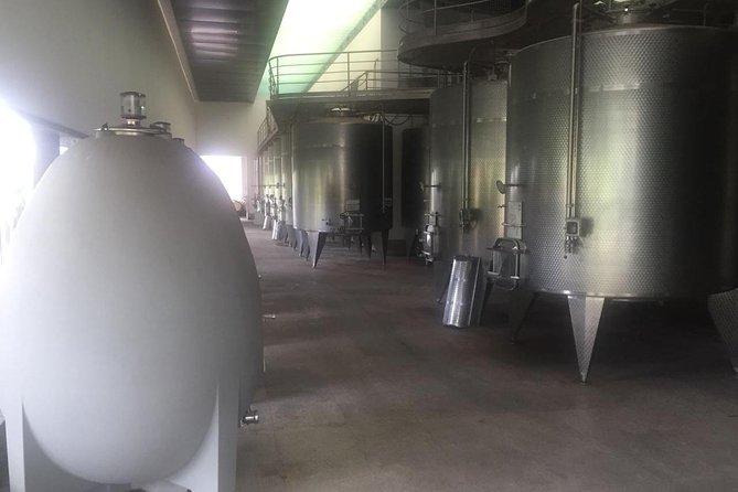 Half Day Tour to Undurraga Winery, Santiago de Chile