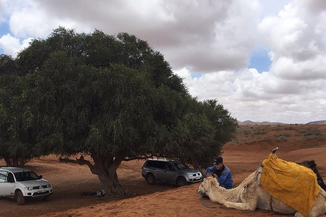 SMALL SAHARA & SILVER CITY- MASSA & TIZNIT IN 4x4 WITH LUNCH IN BERBER STYLE photo 4