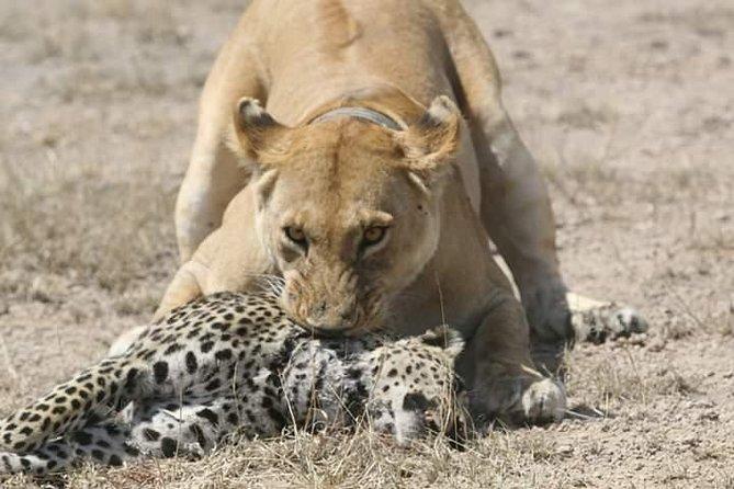 5 Days Lodging Safari (tarangire,serengeti, Ngorongoro,manyara)
