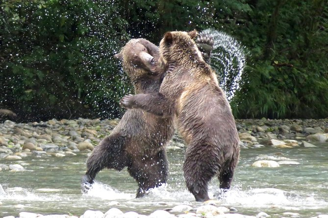 Grizzly Bear Expedition