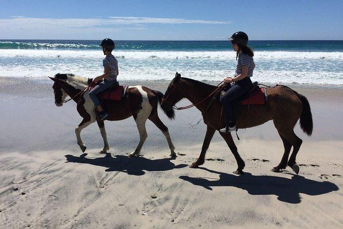 Horse Riding Barrigona Beach Tour, 3h and half