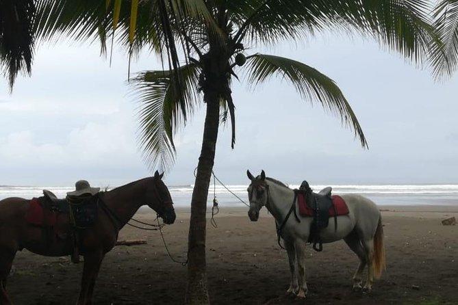 AM Beach Riding Adventure Near Jaco