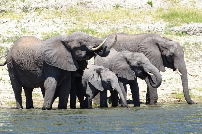 Chobe Safari Experience Day Trip