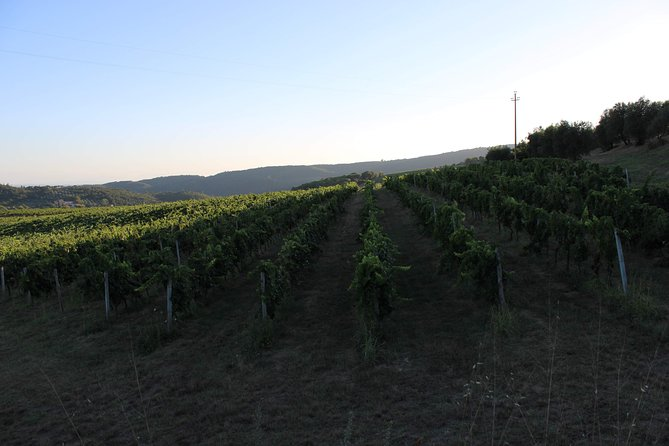 San Gimignano & Sunset Wine Tasting with Dinner in Farmhouse, from Florence