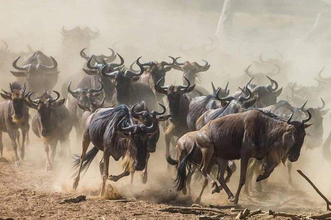 4 Days Serengeti Great Migration Safari( Serengeti & Ngorongoro)