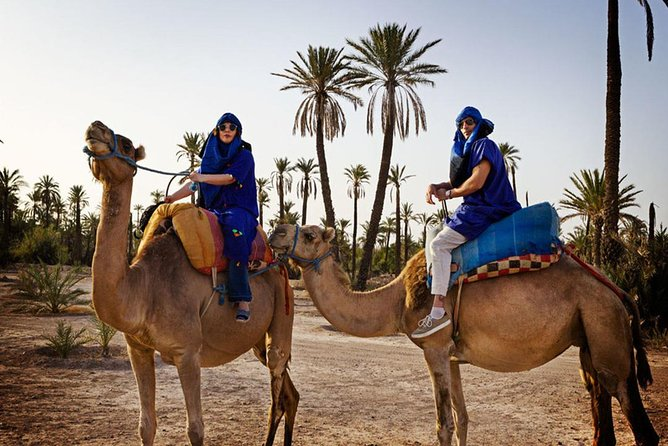 Marrakech Camel Ride In palm Grove with tea Breaks
