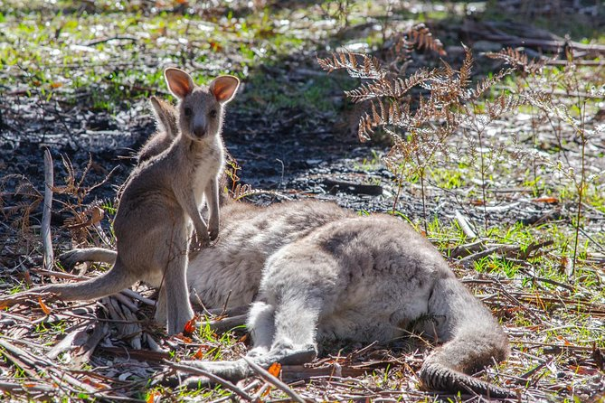 Melbourne to Adelaide South East Coast 3 Day Overland Tour