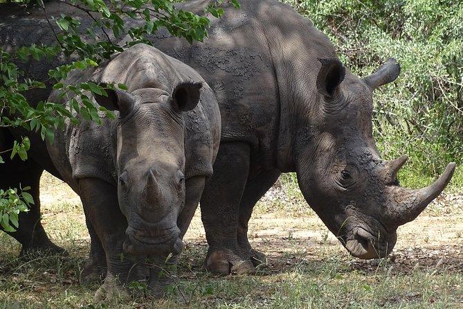 The Wild Rhino Safari Experience