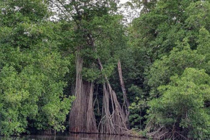 Black River Safari Private Tour