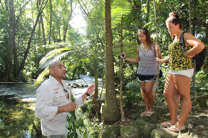 Cairns Daintree Rainforest and Cape Tribulation 2-Day Tour