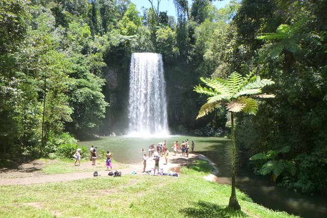 Waterfalls and Rainforest Day Tour photo 3