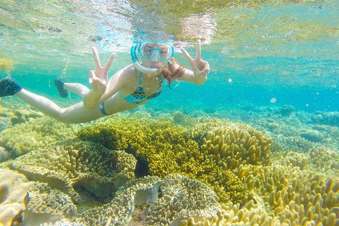 Dumaguete Apo Island Snorkeling Tour