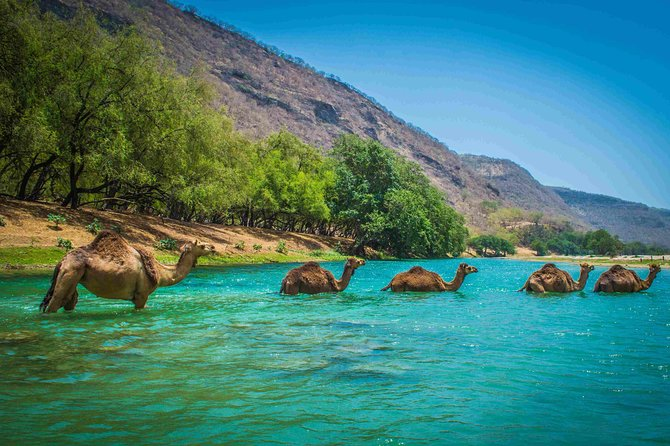 Private tour full day west of Salalah