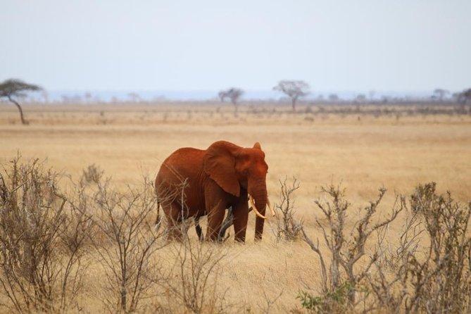 Two Days Tsavo East Safari from Diani Beach