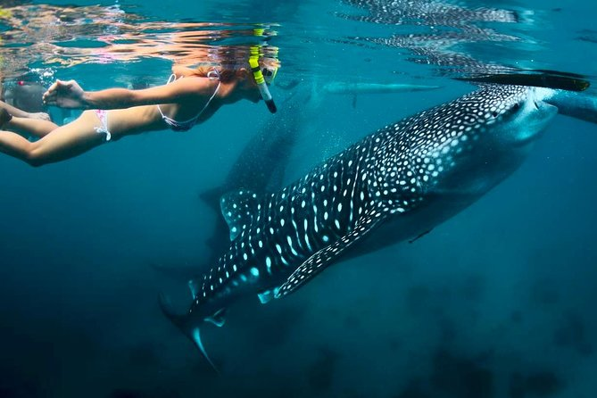 Whale Shark Watching and Sumilon Sandbar Private Tour Package