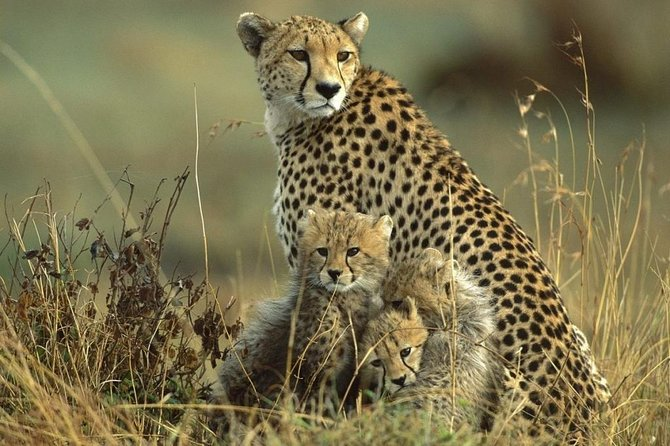 3 Days Kidepo Wildlife Adventure Image