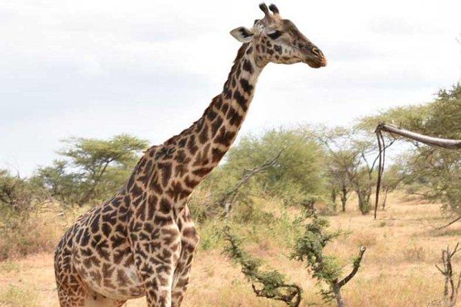2 Days African Safaris