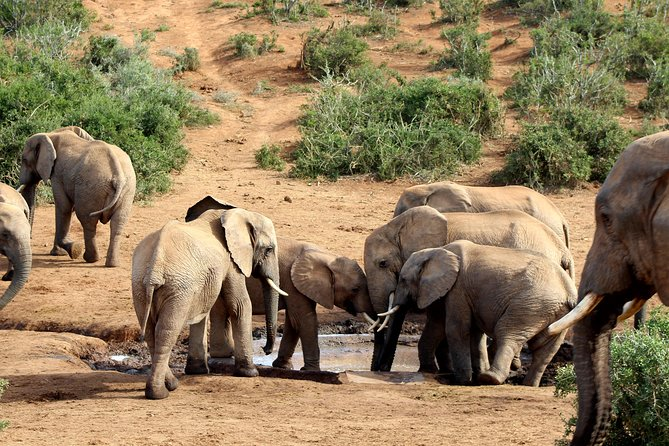 Addo Elephant National Park Full Day Safari photo 7