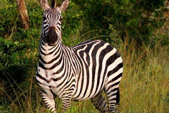 4 Day lake Mburo wildlife, boat, and cultural safari