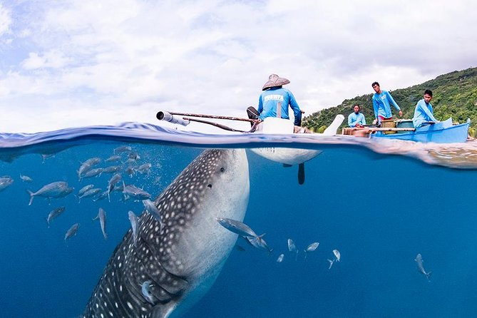 Dive In Oslob Whaleshark And Sumilon From Dumaguete photo 6