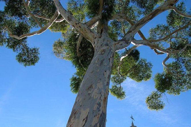 Private Tour: Balboa Park in San Diego photo 13