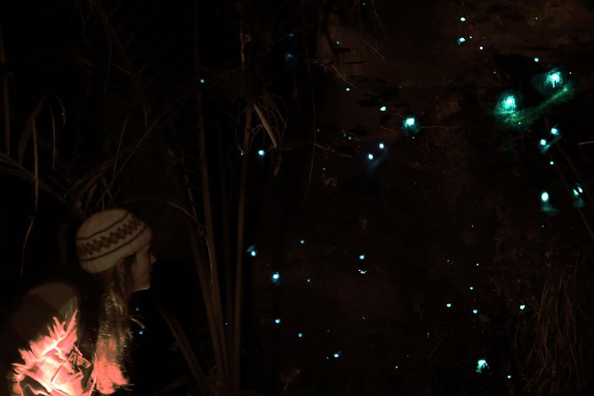 See Auckland's Secret Glow Worms