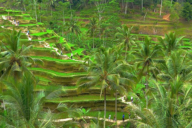 Ubud Sanctuary Half Day Tour