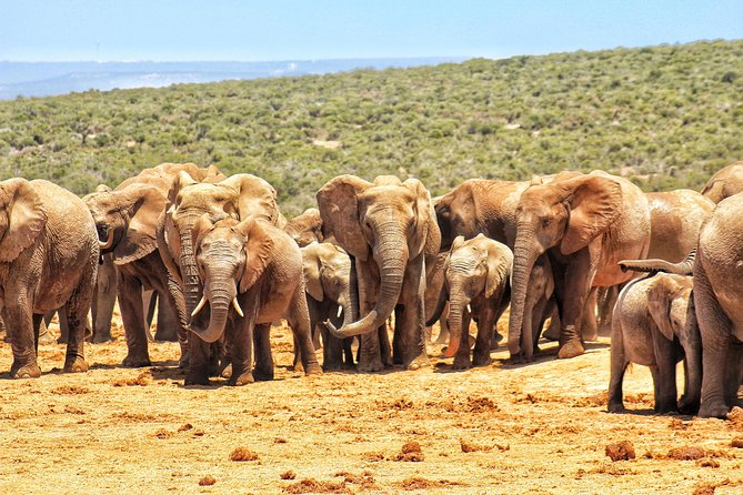 Addo Elephant National Park Full Day Safari photo 24