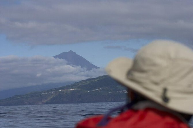 Whale and dolphin watching in Pico Island