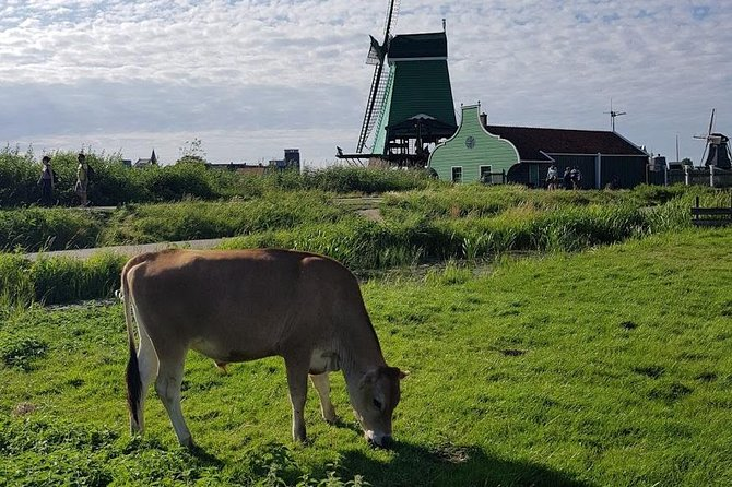Amsterdam City & Countryside Tour: The Best of both Worlds