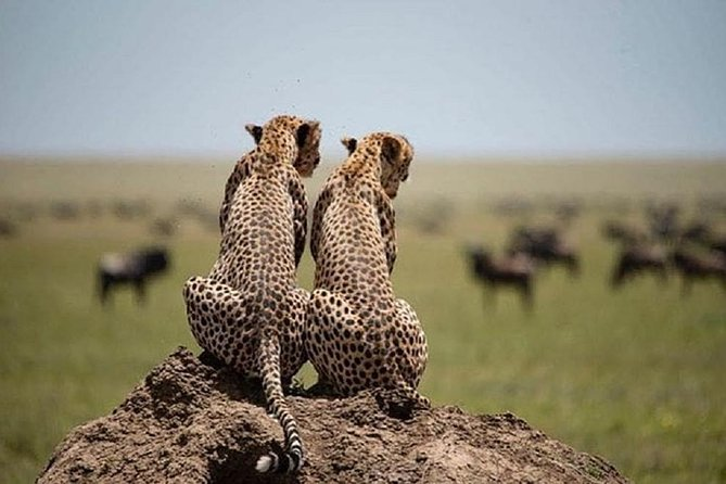 5 days serengeti, ngorongoro, tarangire & manyara lodge tour photo 10
