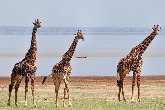 tarangire, ngorongoro & lake manyara park 3 days Group tour