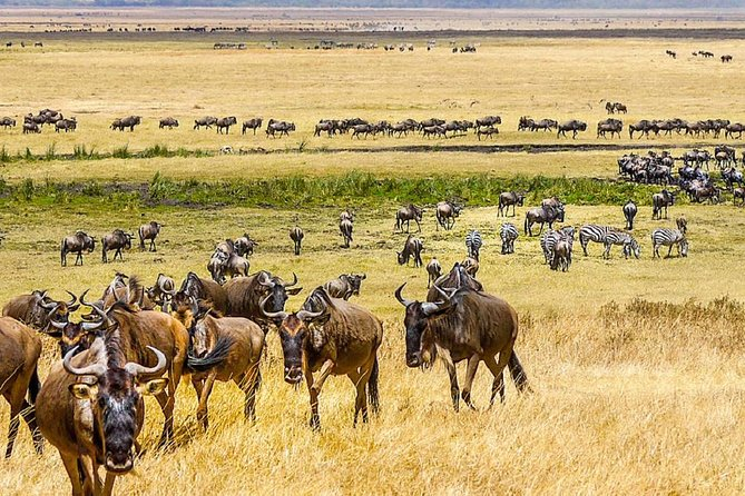 serengeti,ngorongoro,tarangire & lake manyara 6 days group & camping safari