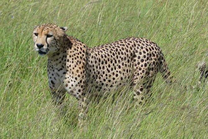 3 days masai Mara budget safari departing daily from Nairobi