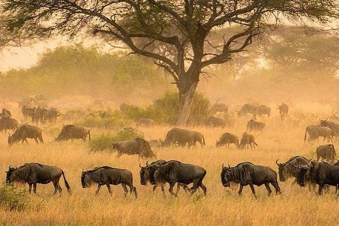serengeti & ngorongoro 3 days private tour