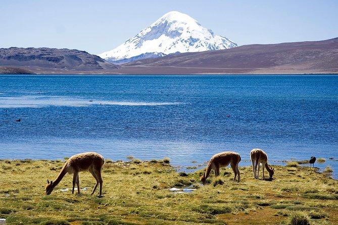 Norte Grande Chile