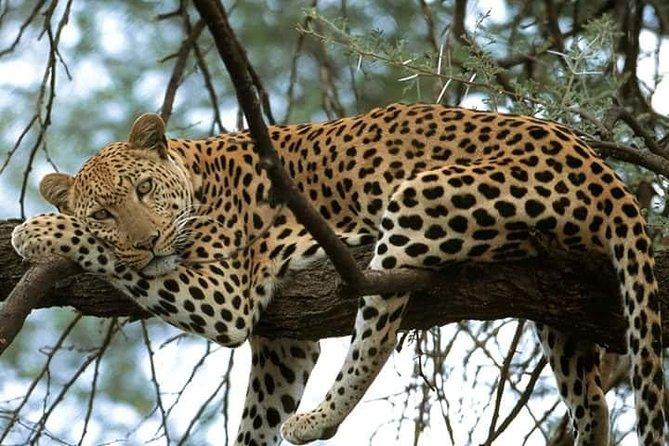4 days Masai Mara and lake Nakuru Budget safari