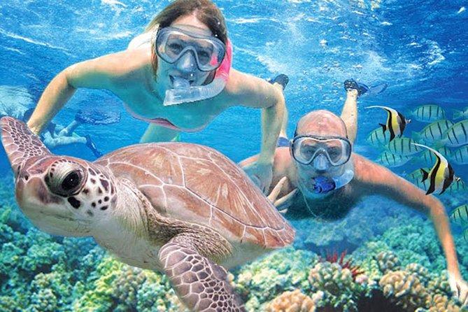 Kauai's Ultimate Guided Shore Snorkeling Adventure (No Boat)