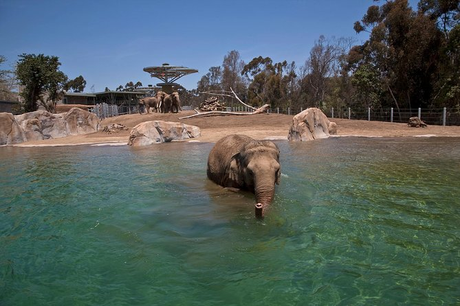 Skip the Line: San Diego Zoo Ticket photo 10