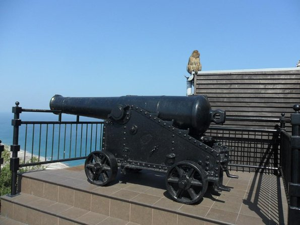 See some of our Cannon's (and Monkeys)
