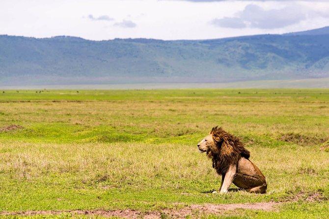 5days Safari Manyara,ngorongoro,serengeti