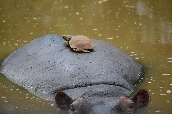 Murchison Falls Wildlife Safaris in 3 Days