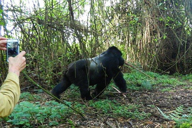 7 Days Gorilla, Bisoke Hiking And Columbus Monkey Safari